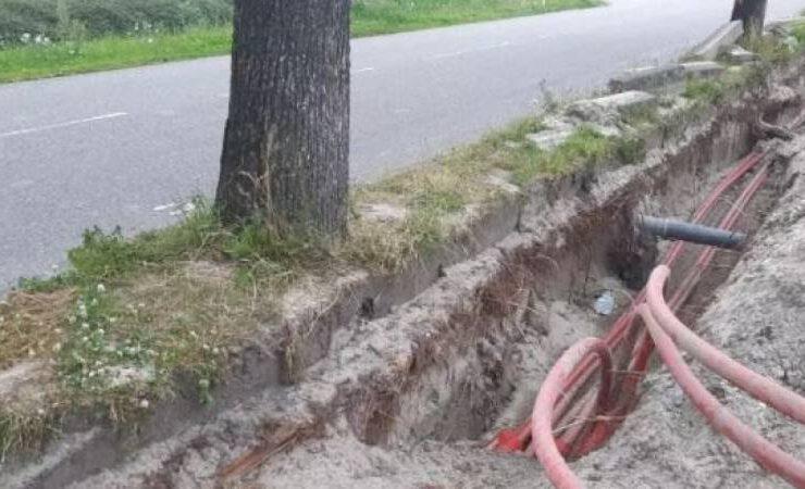Miscommunicatie bij aanleg elektrakabels: dertigtal bomen gekapt